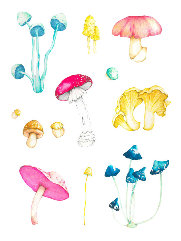 ioana petre mushrooms