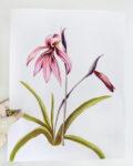 ioana petre lilly