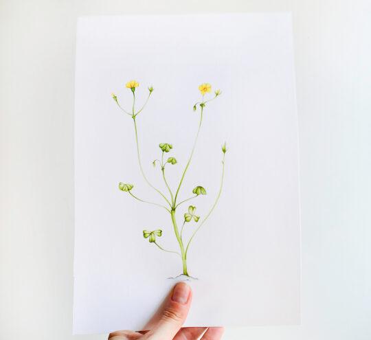 ioana petre yellow flower